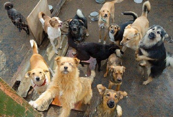 animal-hoarding